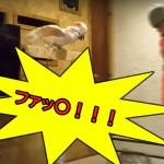 【動画あり】鳥かごを壊されてブチギレるオウム!怒りのあまりファッ○言いすぎワロタwww