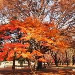 季節の変わり目は体調の変わり目!気を付けていないとすぐ具合が悪くなるっぴ!