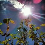 NASA発表!『2016年は史上最も暑い夏になる!』今年の夏は色々ヤバイ!