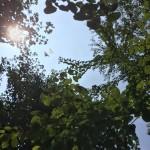 汗がでる季節!一時的に悪化したアトピーも、猪苓湯パワーでおさまった!